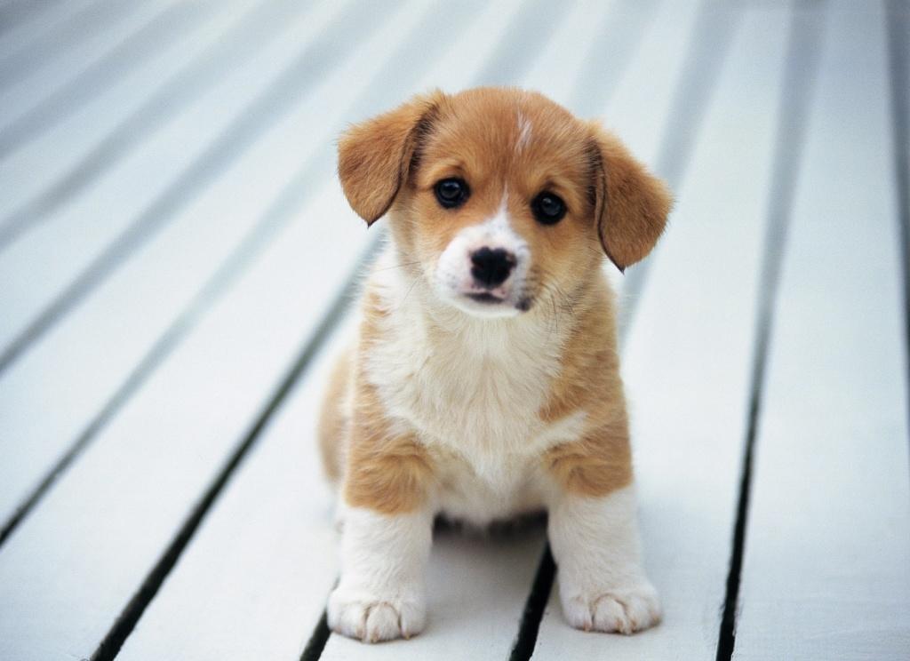 Con chó tiếng Anh là gì?