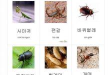 từ vựng côn trùng tiếng hàn